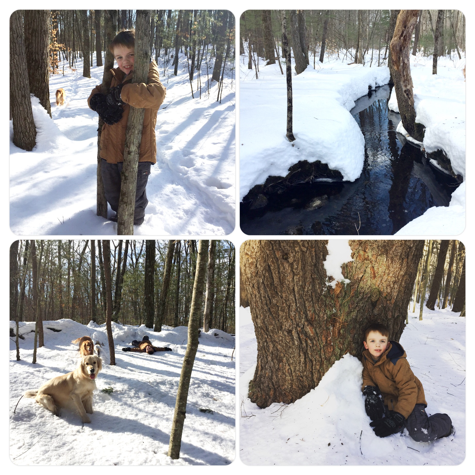 Snow hikes with the dogs at Steel farm.