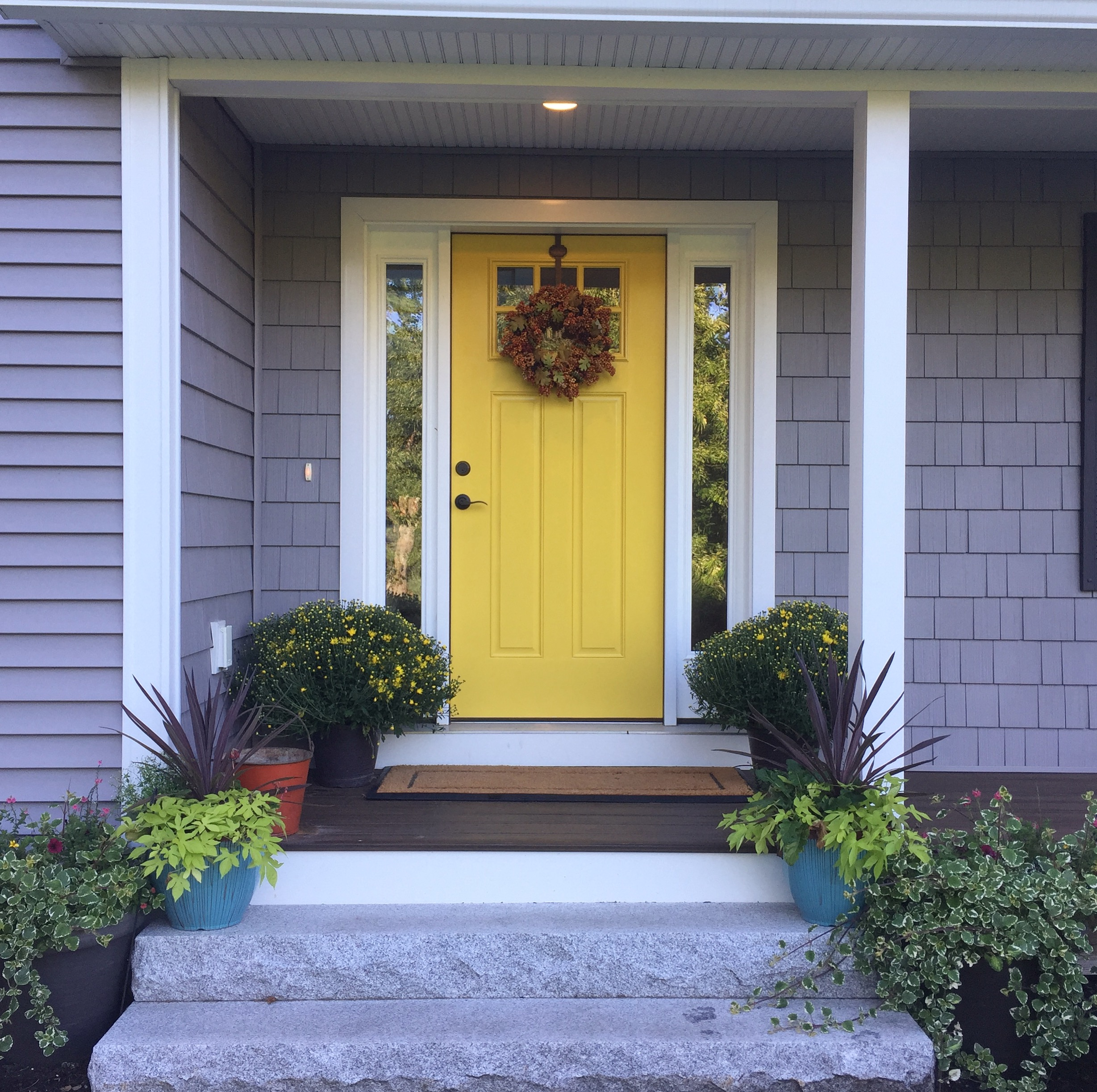 Yellow front door with awesome 9.99 yellow mums from Costco! Not yet in bloom.