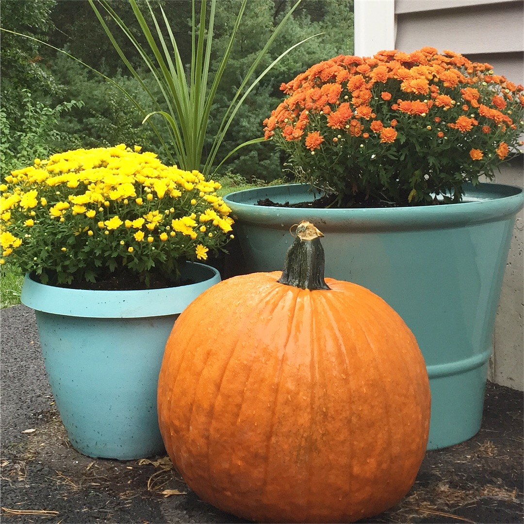 Outside the garage. I took old black pots and spray painted them teal.