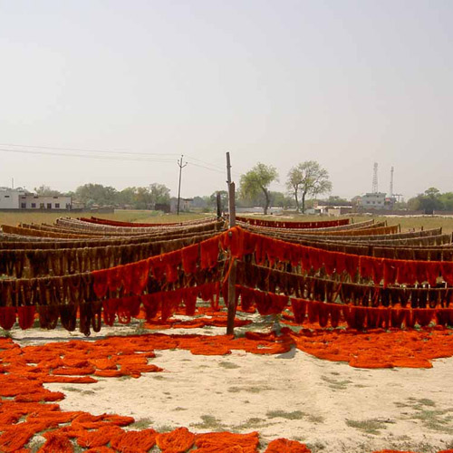 Recently-dyed wool drying in the sun.