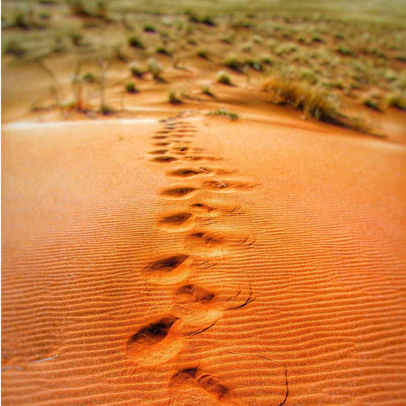 Desert Footsteps.png