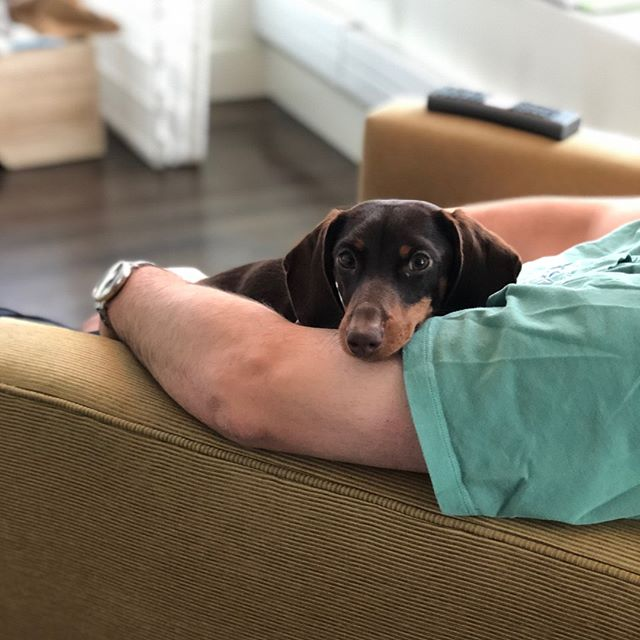 There's no spot comfier than in dad's arms 👨👦 #freedomtaildogs #petofthemonth @dtadler . . . . . . . . . . #freedomtail #dog #dogs #dogsofinsta #dogsofig #dogsofinstagram #dogwalker #pet #cute #boston #bostondogwalker #dogwalkersofinstagram #dogsofboston #petsitter #doglover #doglovers #pets #instapet #dogwalk #dogsdaily #doggram #woofwoof #doggylove #doggie #cutedog #bostondog #bostondogs