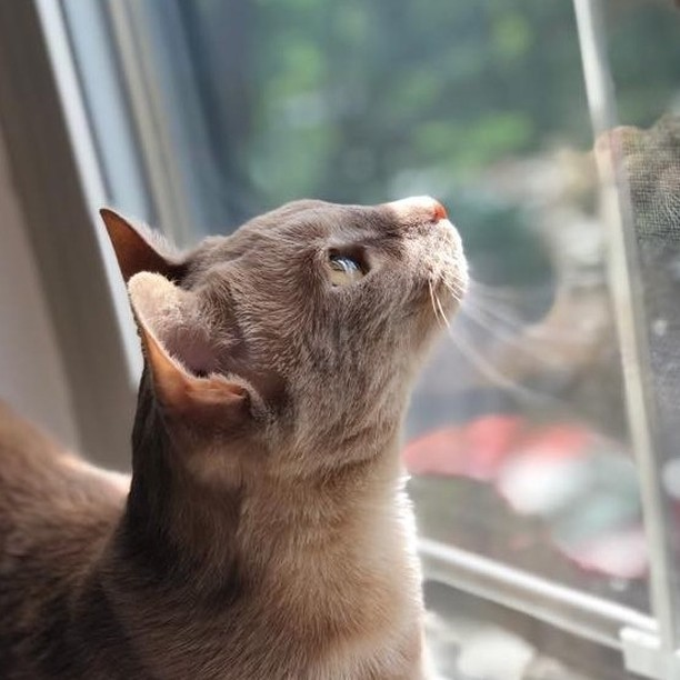 The sky is the limit (or at least the window) 🚀 #freedomtailcats @house__of__leo . . . . . . . . . . #freedomtail #freedomtaildogs #cat #cats #catsofinsta #catsofig #catsofinstagram #dogwalker #petsitter #catsitter #pet #cute #boston #bostondogwalker #pets #instapet #dogwalkersofinstagram #catsofboston #bostoncat #bostoncats #caturday