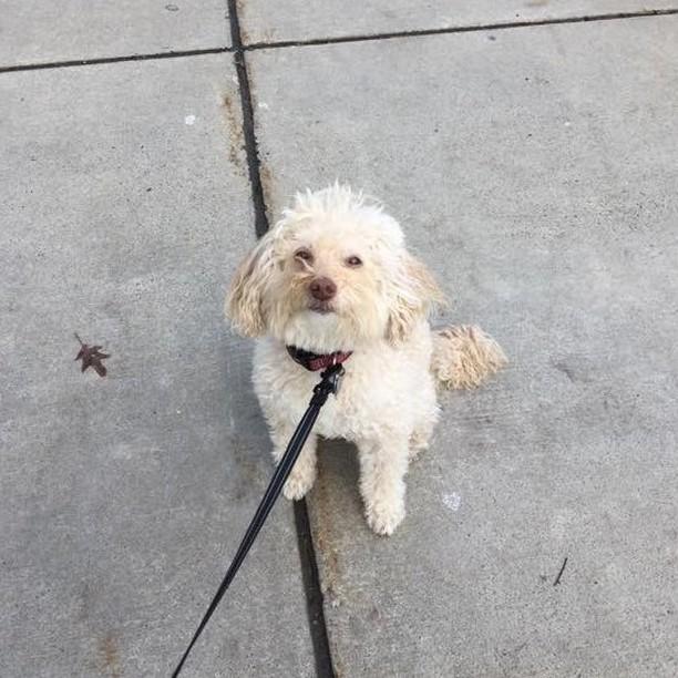 Tipper treads tamely, tip-toeing tentatively to tempt Trent's treats 🐾 #freedomtaildogs . . . . . . . . . . #freedomtail #dog #dogs #dogsofinsta #dogsofig #dogsofinstagram #dogwalker #pet #cute #boston #bostondogwalker #dogwalkersofinstagram #dogsofboston #petsitter #doglover #doglovers #pets #instapet #dogwalk #dogsdaily #doggram #woofwoof #doggylove #doggie #cutedog #bostondog #bostondogs