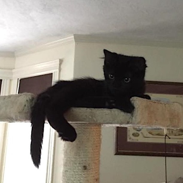 Rebel is anything but bad luck - Happy #Caturday! #freedomtailcats . . . . . . . . . . #freedomtail #freedomtaildogs #cat #cats #catsofinsta #catsofig #catsofinstagram #dogwalker #petsitter #catsitter #pet #cute #boston #bostondogwalker #pets #instapet #dogwalkersofinstagram #catsofboston #bostoncat #bostoncats