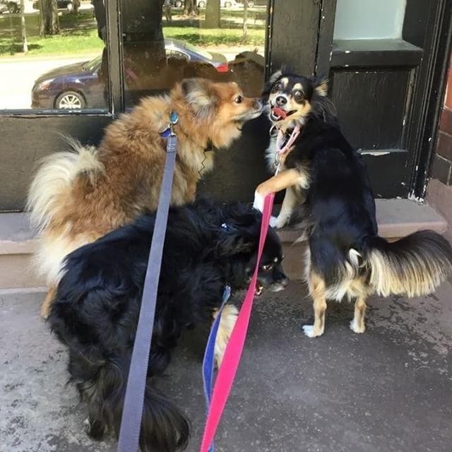 The Gang 🦁🐯🐻 #freedomtaildogs . . . . . . . . . . #freedomtail #dog #dogs #dogsofinsta #dogsofig #dogsofinstagram #dogwalker #pet #cute #boston #bostondogwalker #dogwalkersofinstagram #dogsofboston #petsitter #doglover #doglovers #pets #instapet #dogwalk #dogsdaily #doggram #woofwoof #doggylove #doggie #cutedog #bostondog #bostondogs
