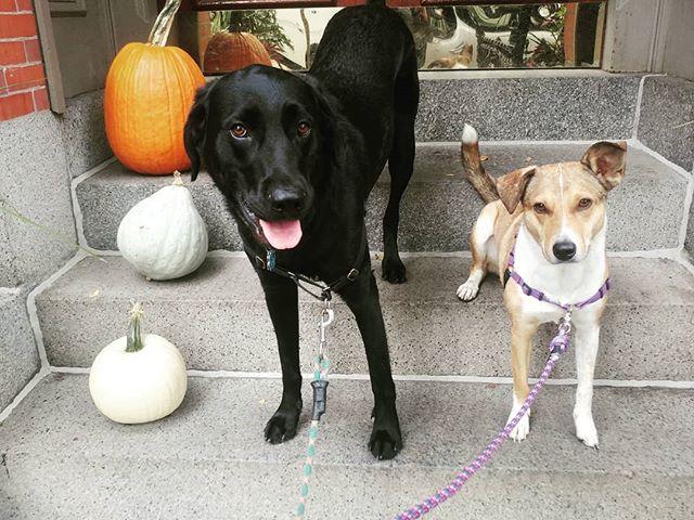Pumpkins & Pups 🎃🐶