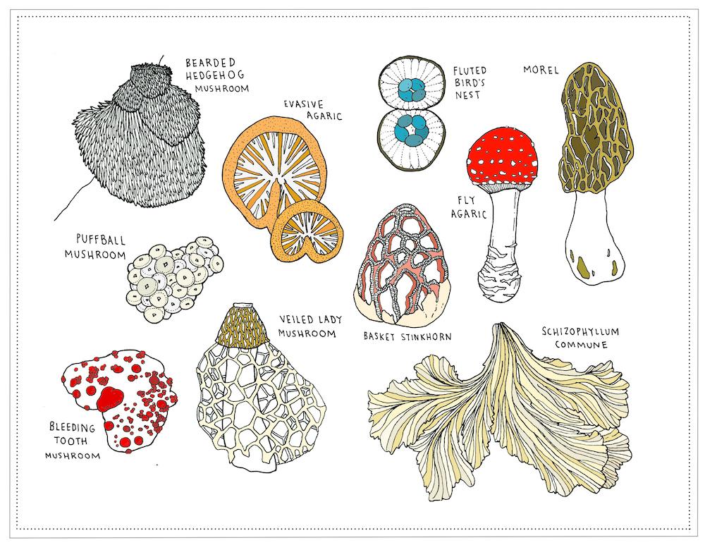 mushrooms small.jpg