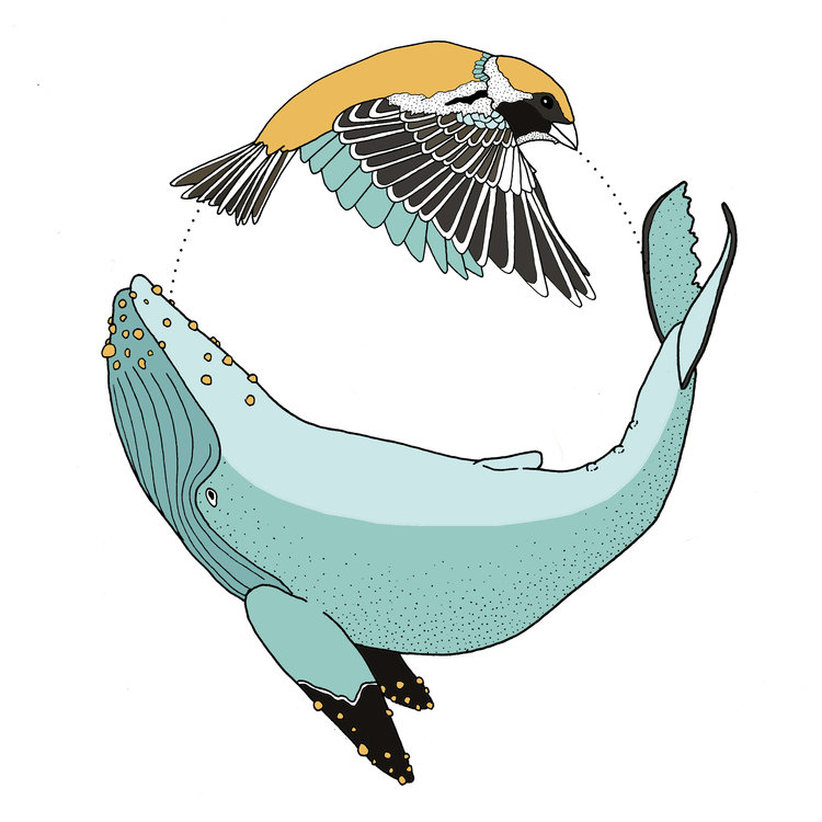 Sparrow+and+Whale+color+2.jpg