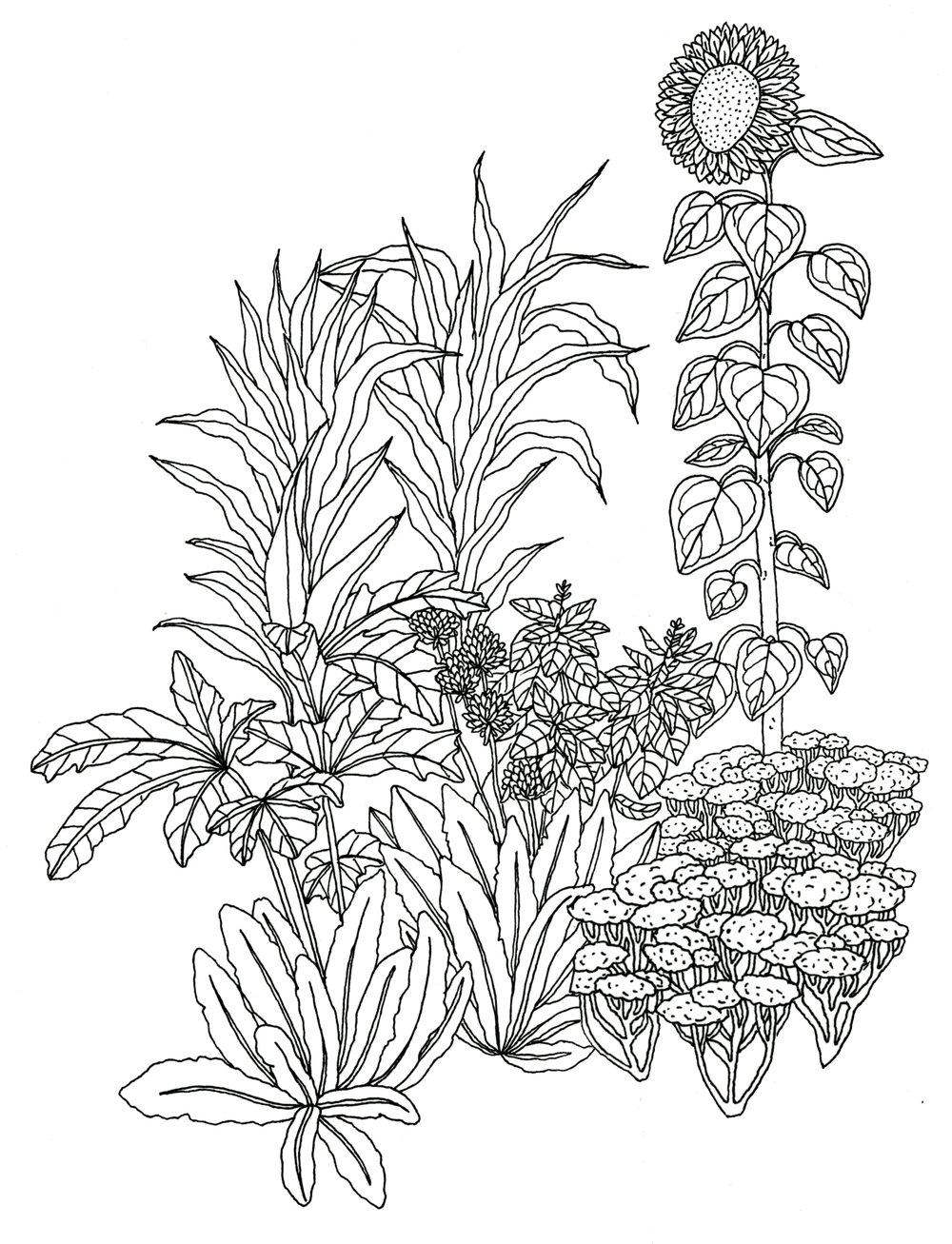 Lush+garden+1405.jpg