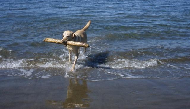 Dakota, career change guide dog