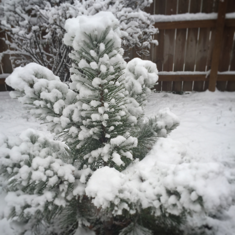 My yard on November 17th!