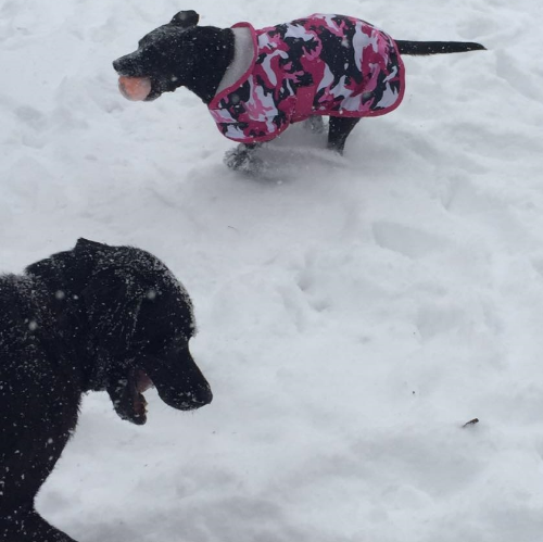 Max and Sophie's Snow Day!