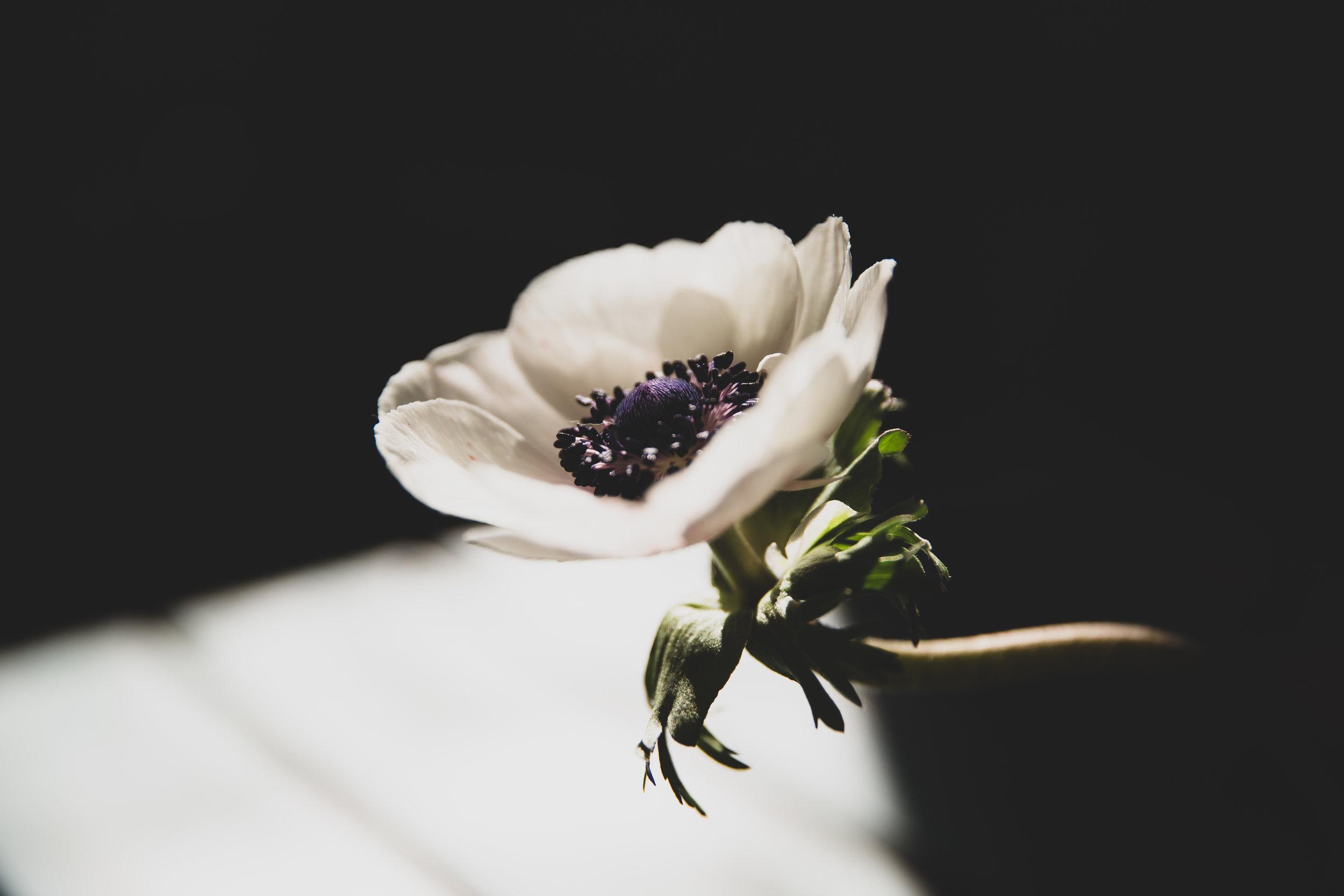 anemone-web.jpg