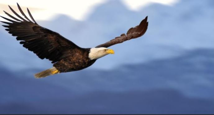 """- """"But they that wait upon the LORD shall renew their strength; they shall mount up with Wings as Eagles; they shall run, and not be weary; and they shall walk, and not faint.""""Isaiah 40:31"""