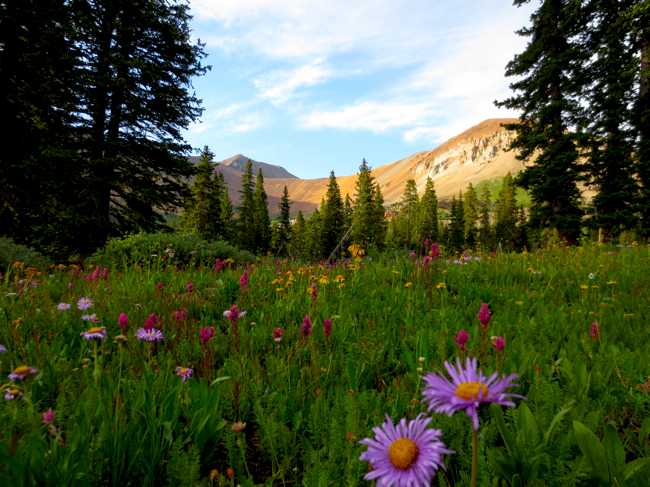 Heading up to Rolling Pass, the wildflowers were just going nuts! It was beautiful.