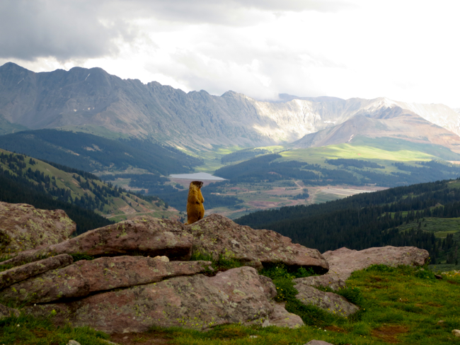 Show off. This marmot was begging for a glamour shot. So I obliged.