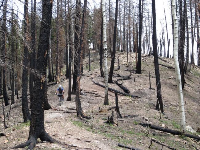 Chunder-y trail through a burn area.