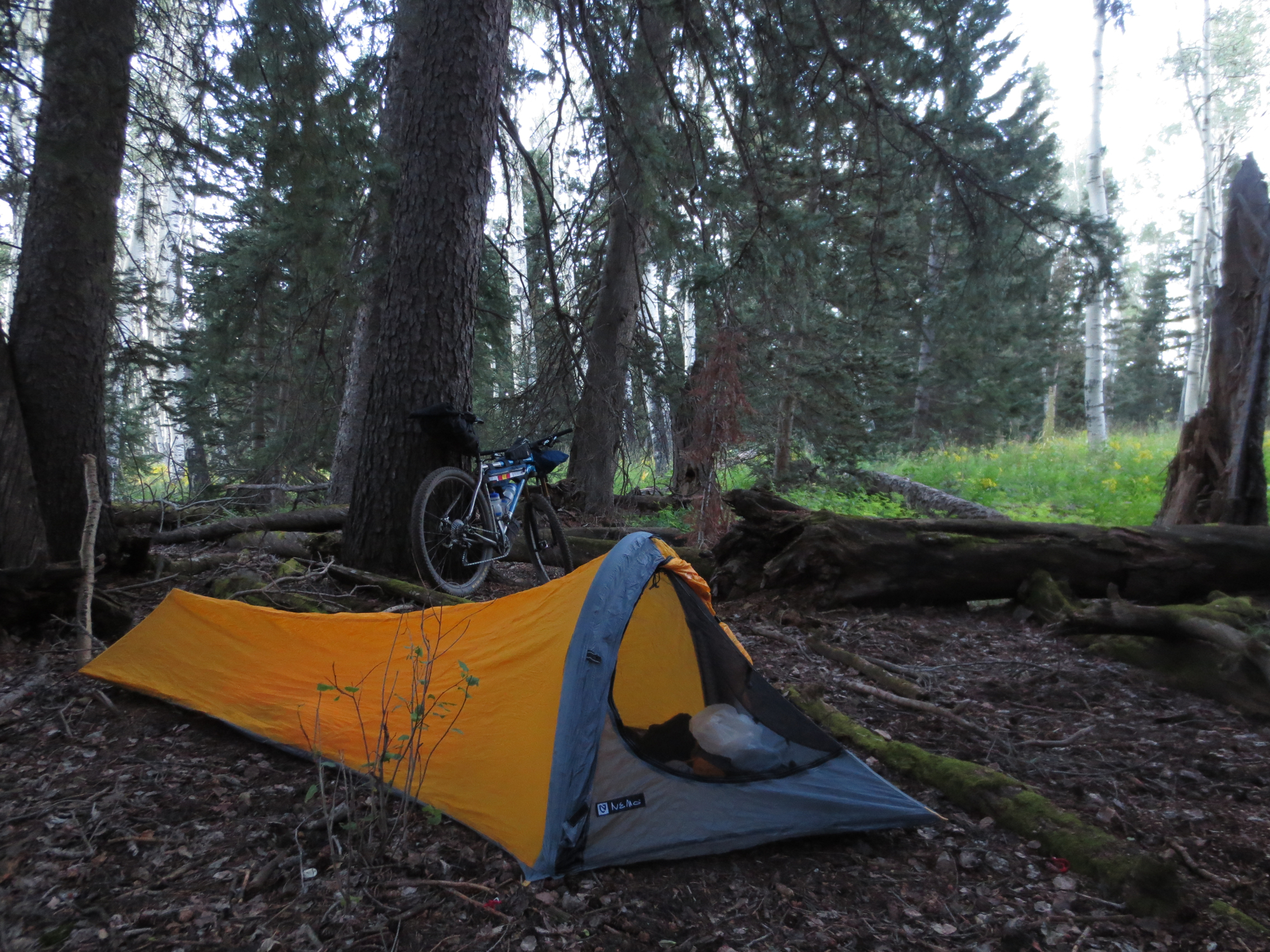 Camp 1 was pretty nice, under some pine trees with soft duff to sleep in. Ahhh...