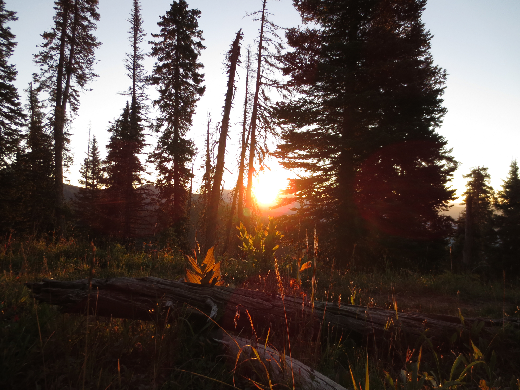 Sunrise from my bivy. It is awfully hard to complain about anything when you awake to this.  Sometime during the night, a feline creature walked right by my spot - there were fresh tracks over top my tire tracks from the night before. Probably was just a lynx or bobcat, but it could have been a small mountain lion!