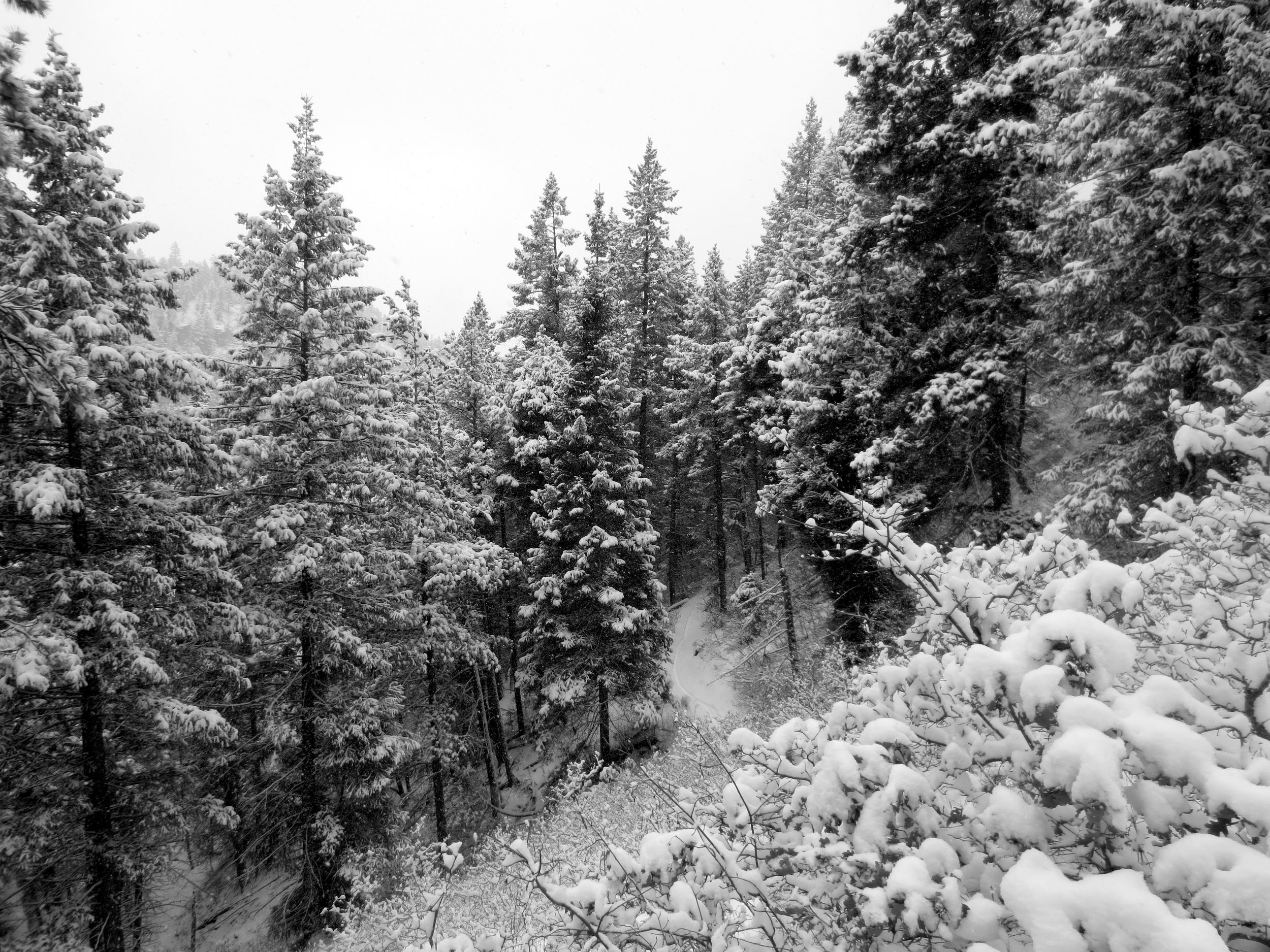Fresh tracks in silent woods.