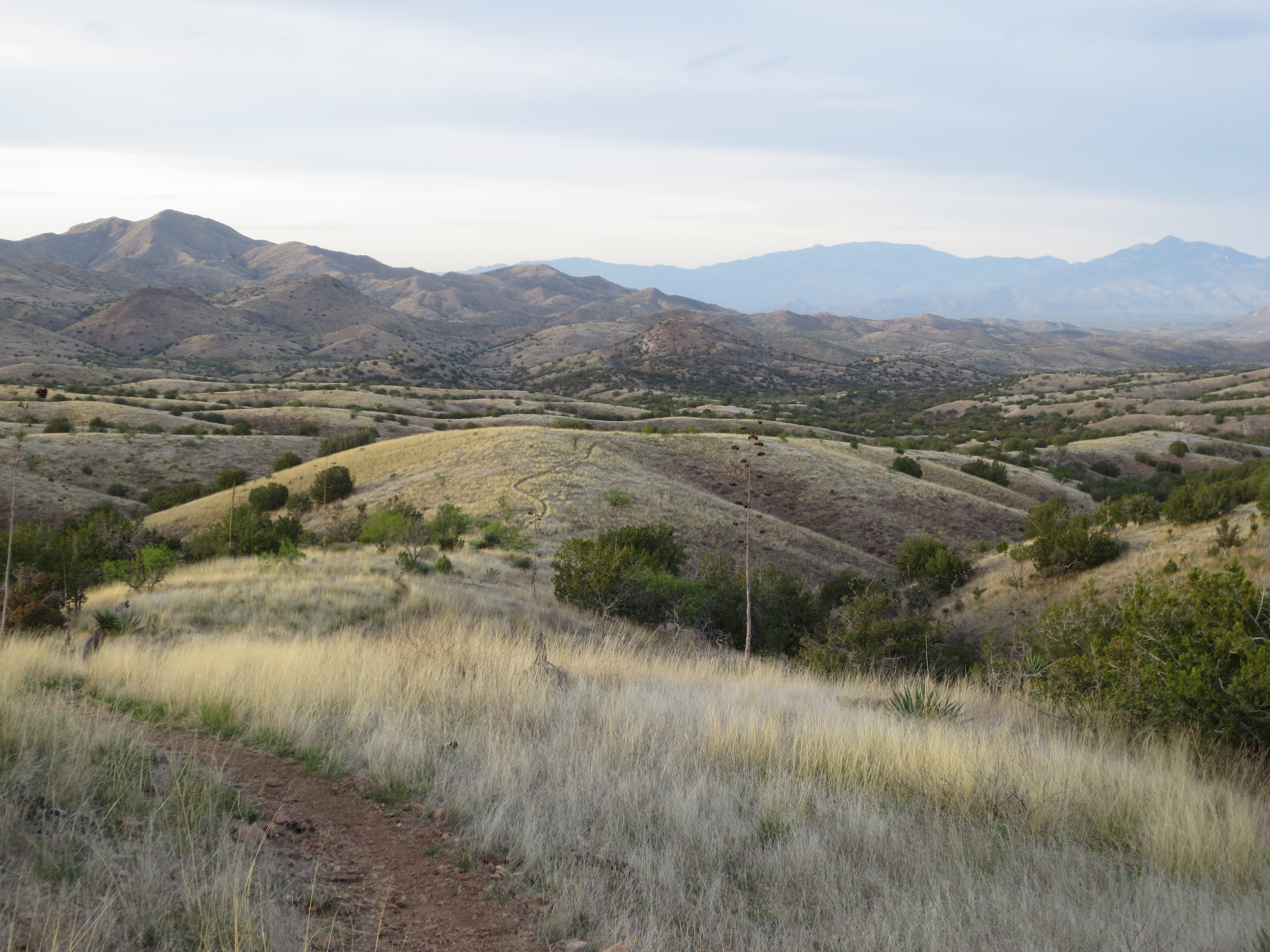 This singletrack in the Las Colinas area just made you feel like you could ride forever.  Or, at least, for several more hours.