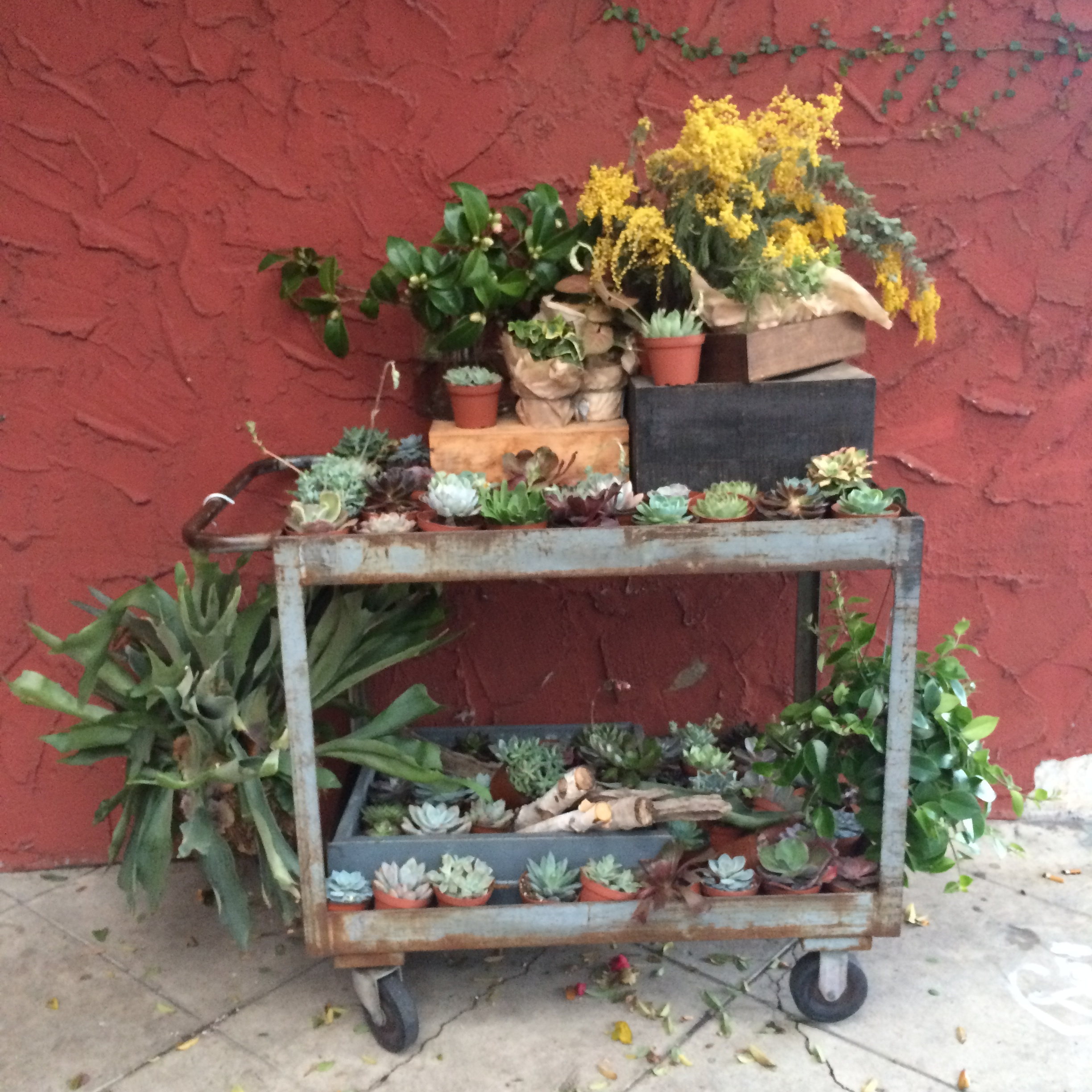 Such succulents! LA aesthetic on point at  Clementine Flowers .