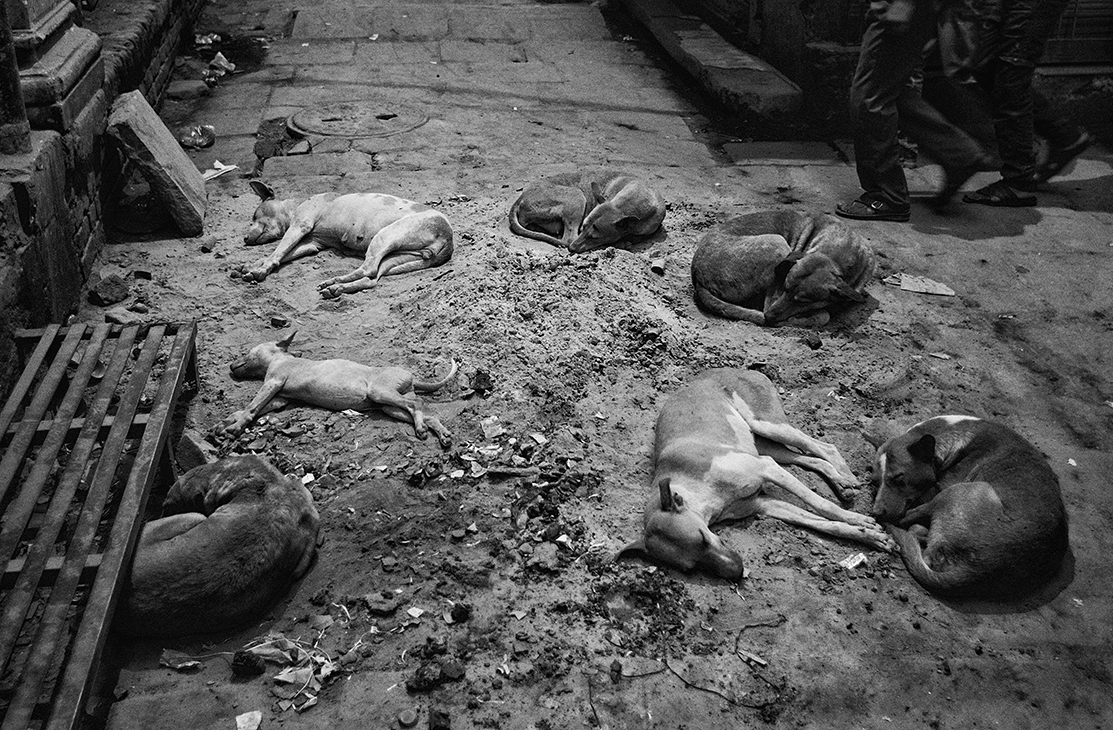 """Sleeping Dogs, Varanasi, India""                    copyright : Russell Shakespeare 2015"
