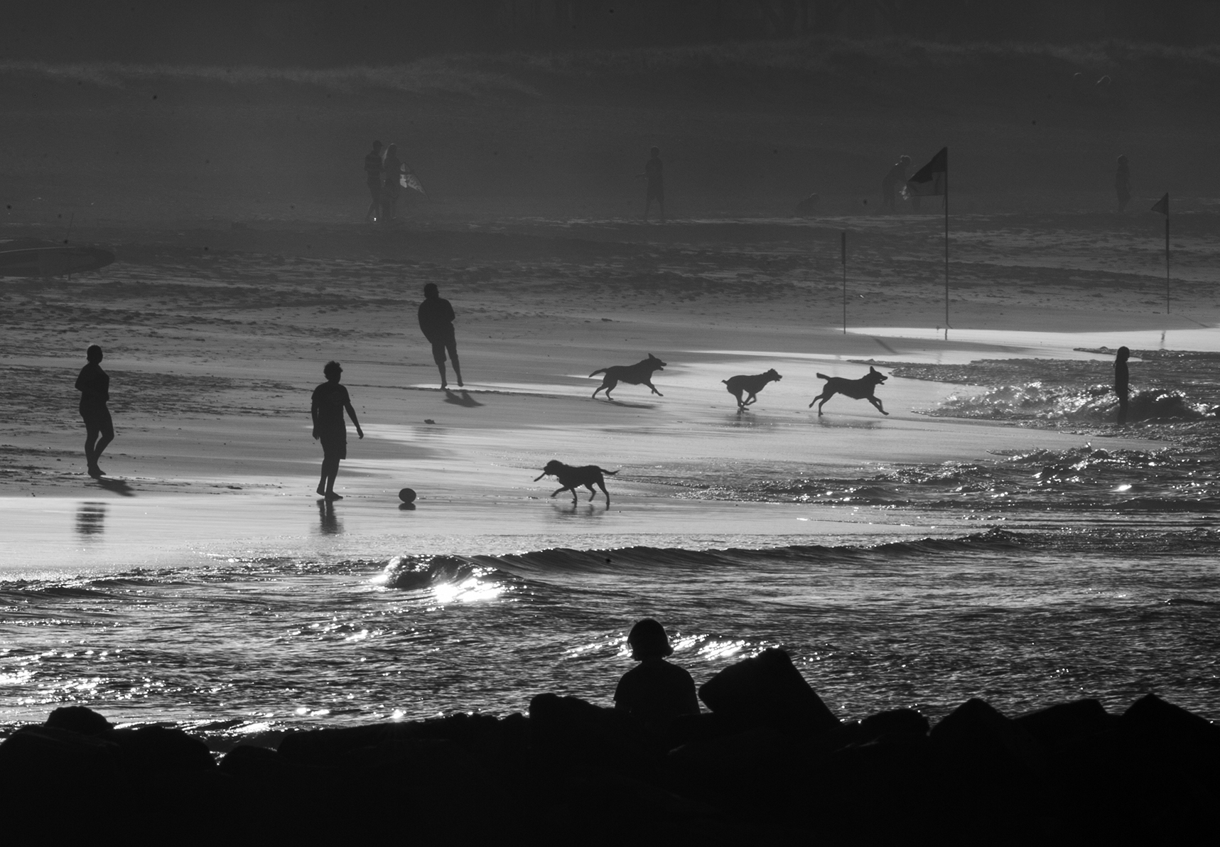 """Dog Run"" Palm Beach.                                   Photo copyright : Russell Shakespeare 2015"