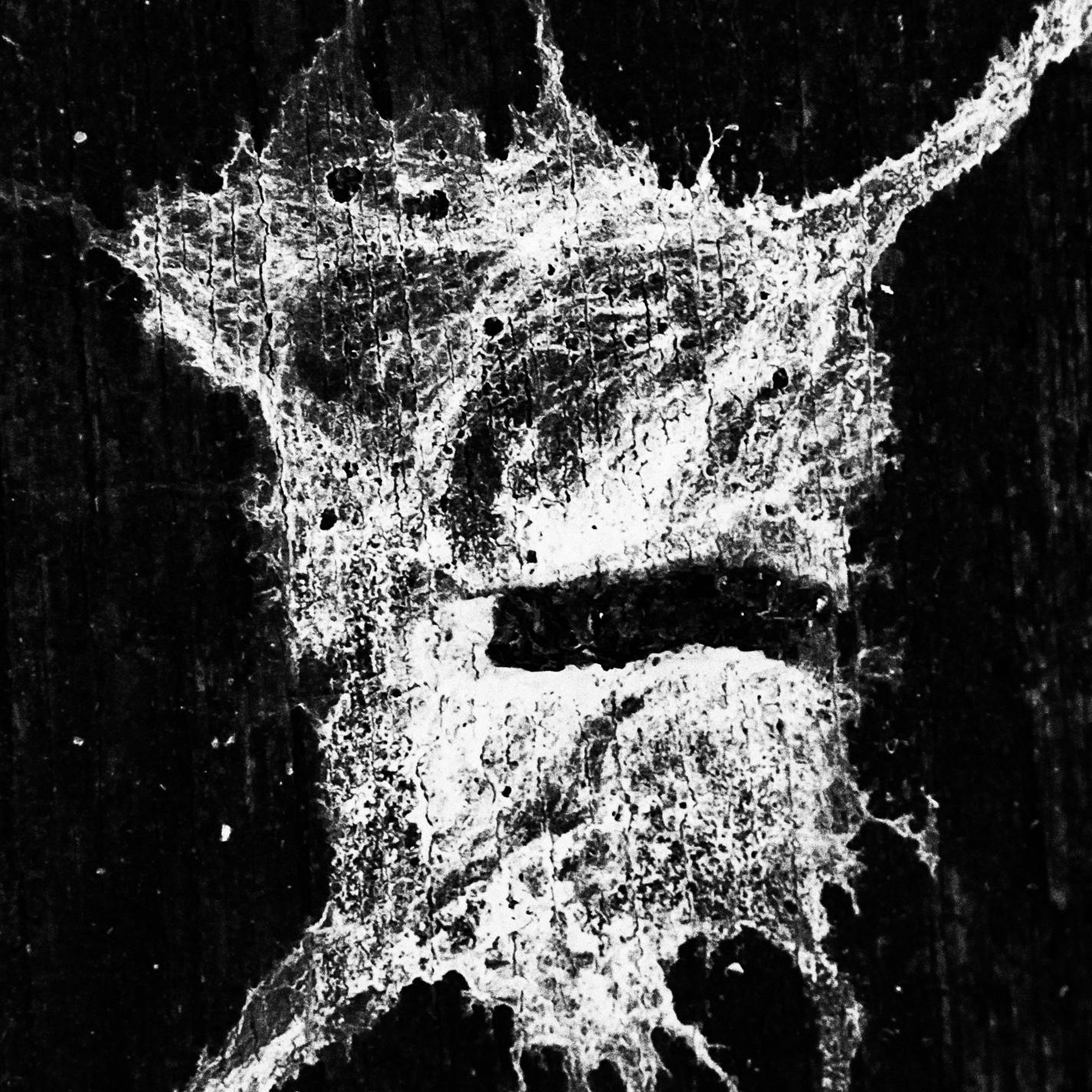 """""""Splat""""                                         © Russell Shakespeare 2016"""