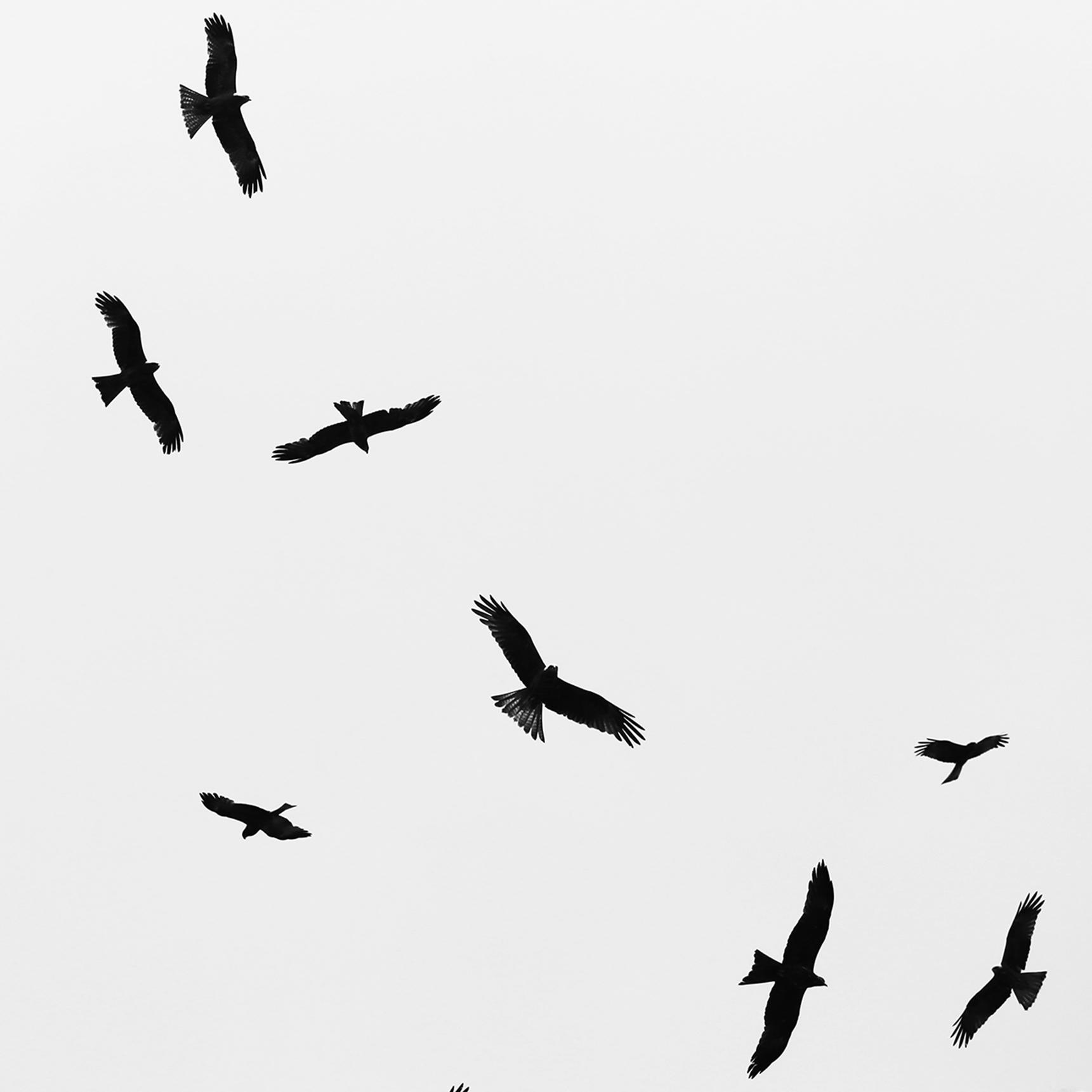 """Steve Irwin Reserve""       © Russell Shakespeare 2016"
