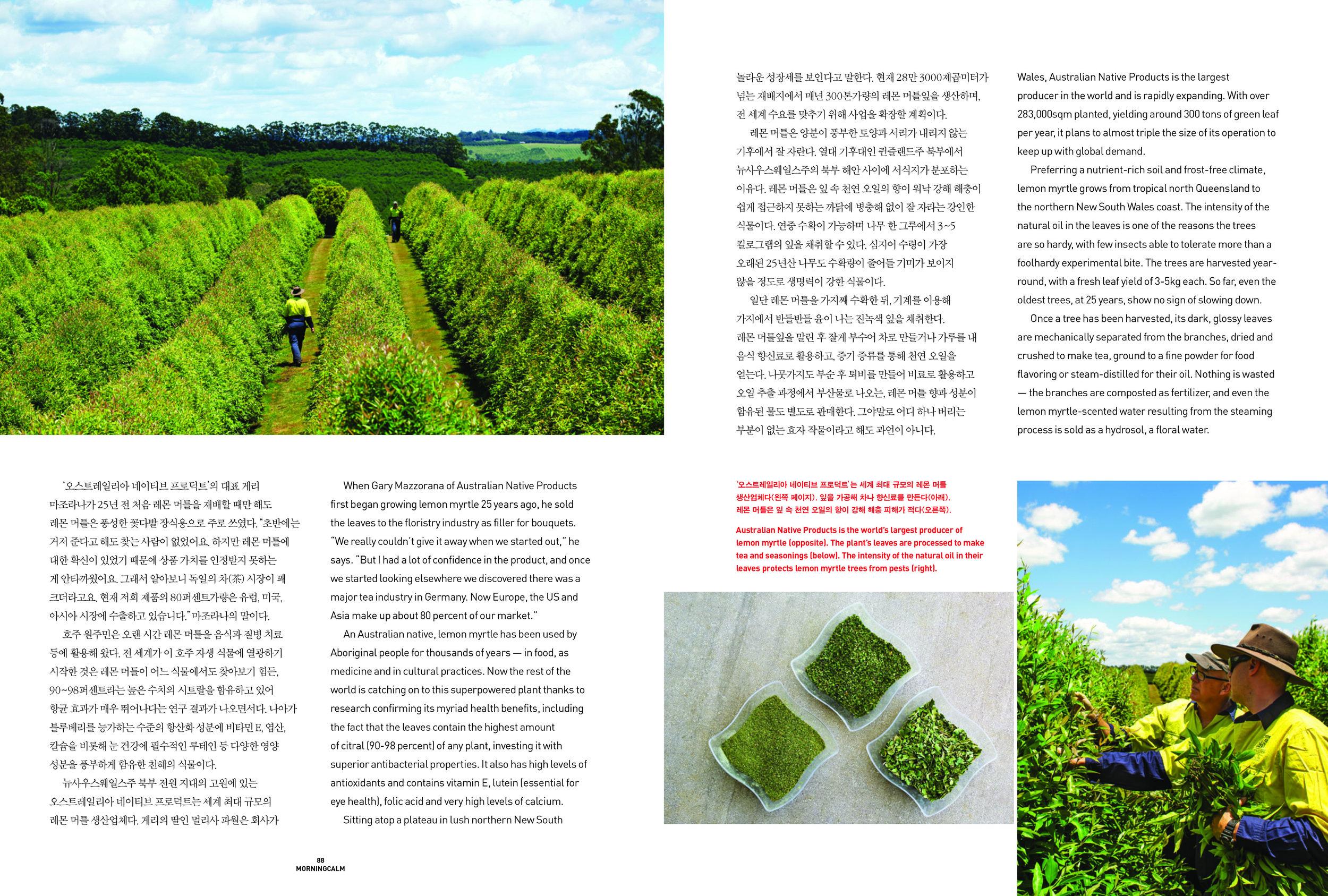 2 - World Foods - Lemon Myrtle-2.jpg