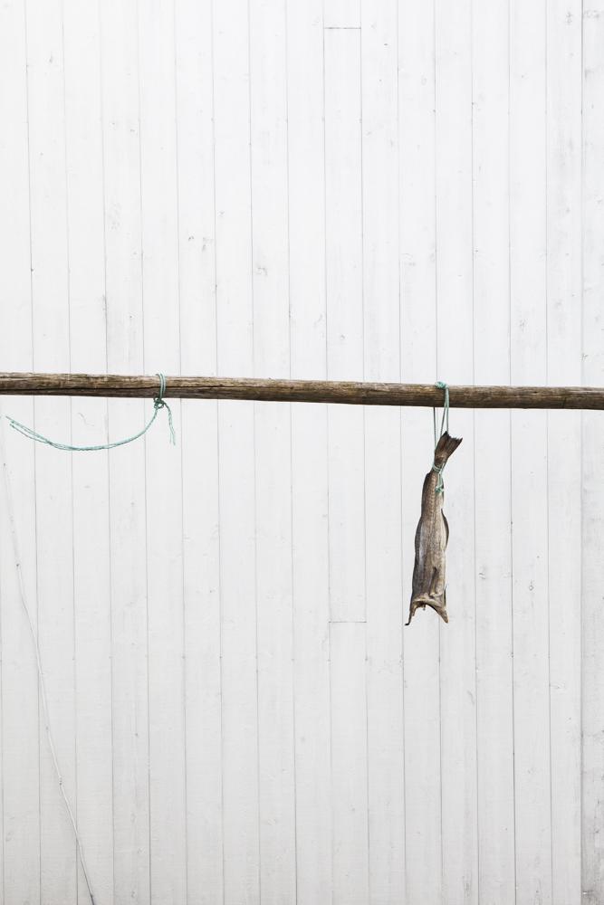 IMG_0289hangingfish.jpg
