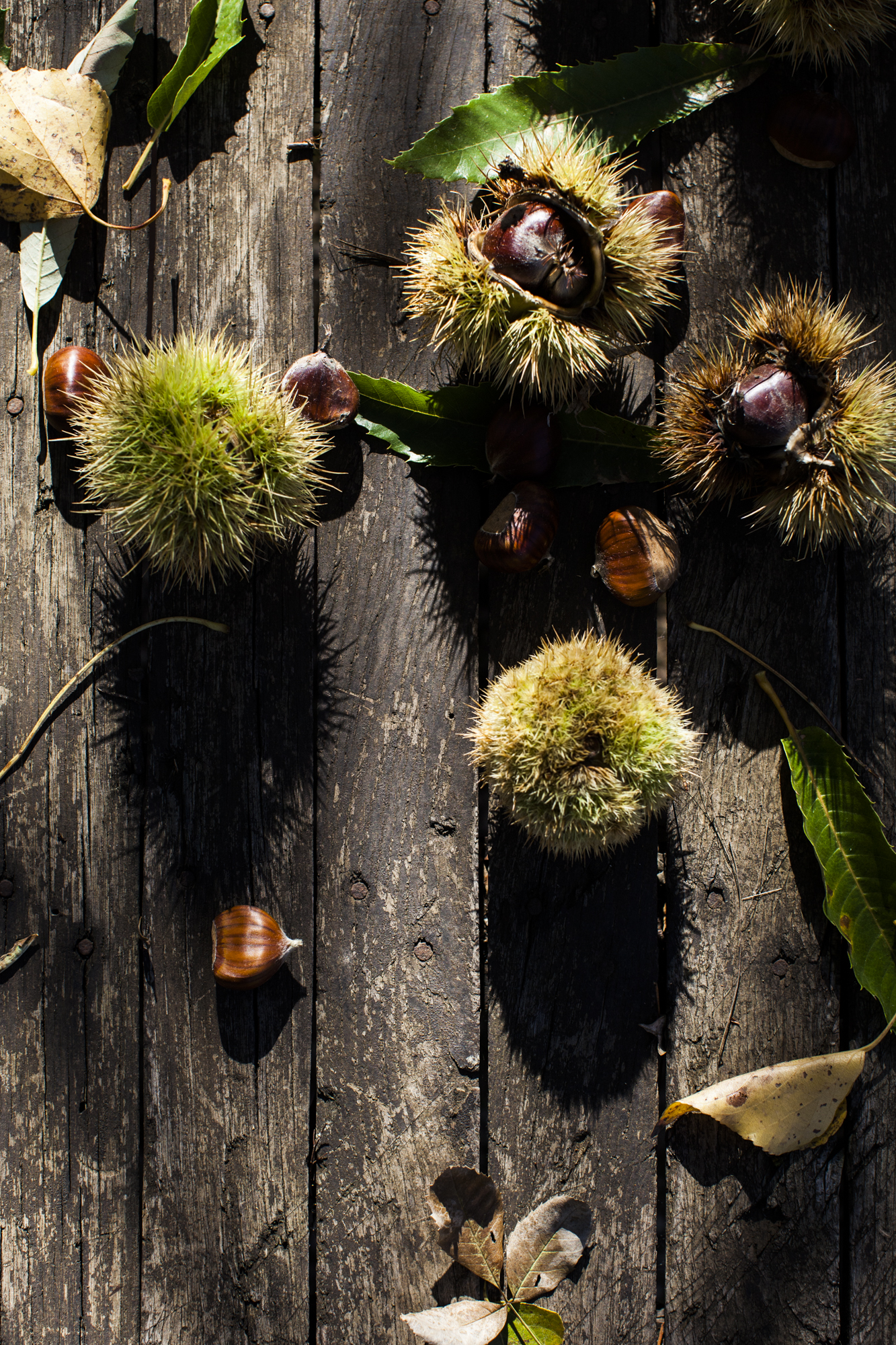 Chestnuts-13.jpg