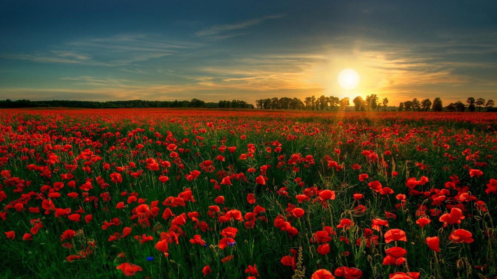 7040782-beautiful-flower-garden.jpg