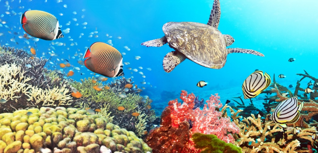 Coral-Reef-Panorama.jpeg