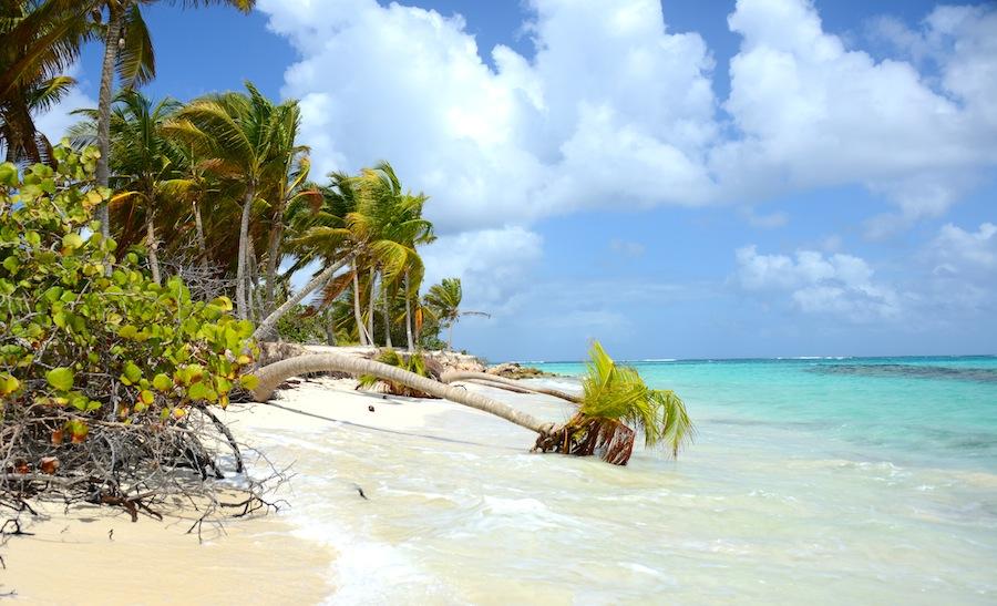 Susan Croft Photography C2015 Shoal Bay East Anguilla Palms.JPG