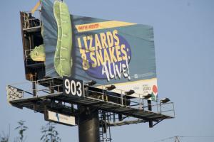 don-lizardssnakes.jpg