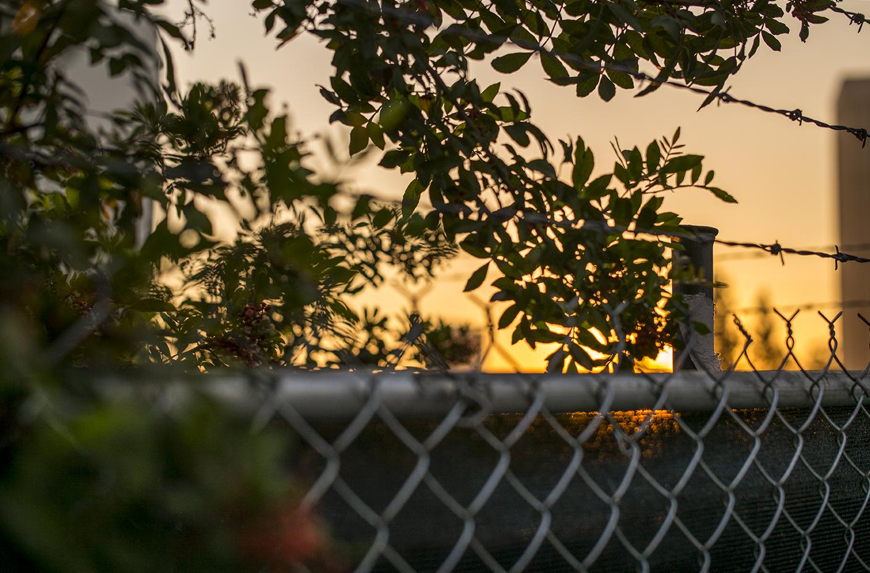 Fence Near Studio,  2016, Digital Photograph