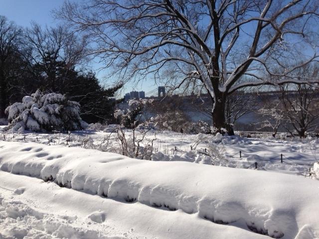 16-01 Snow in the park 2.JPG