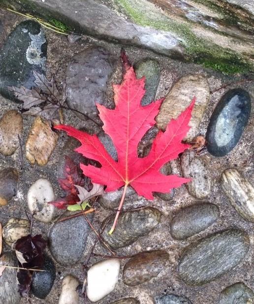 fall leave Ispra.JPG