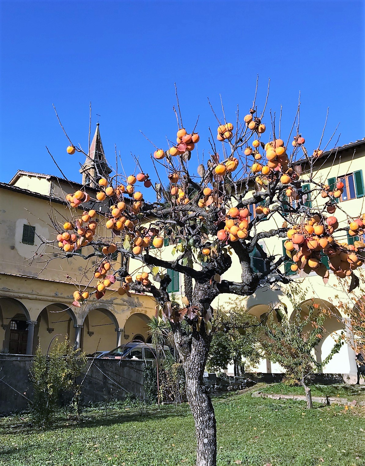 17-11 fruit tree 4.jpg