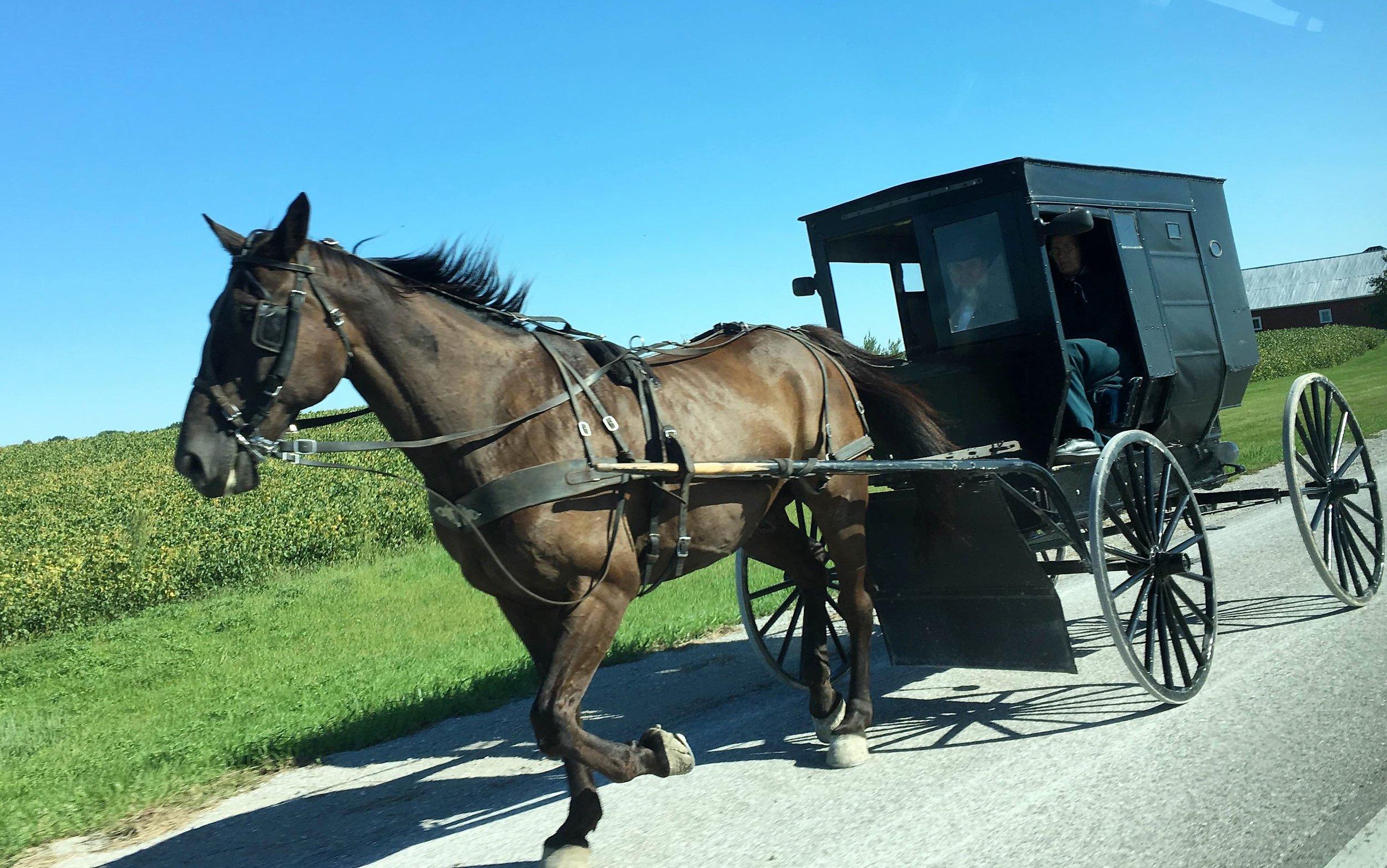 21 - horse.jpg