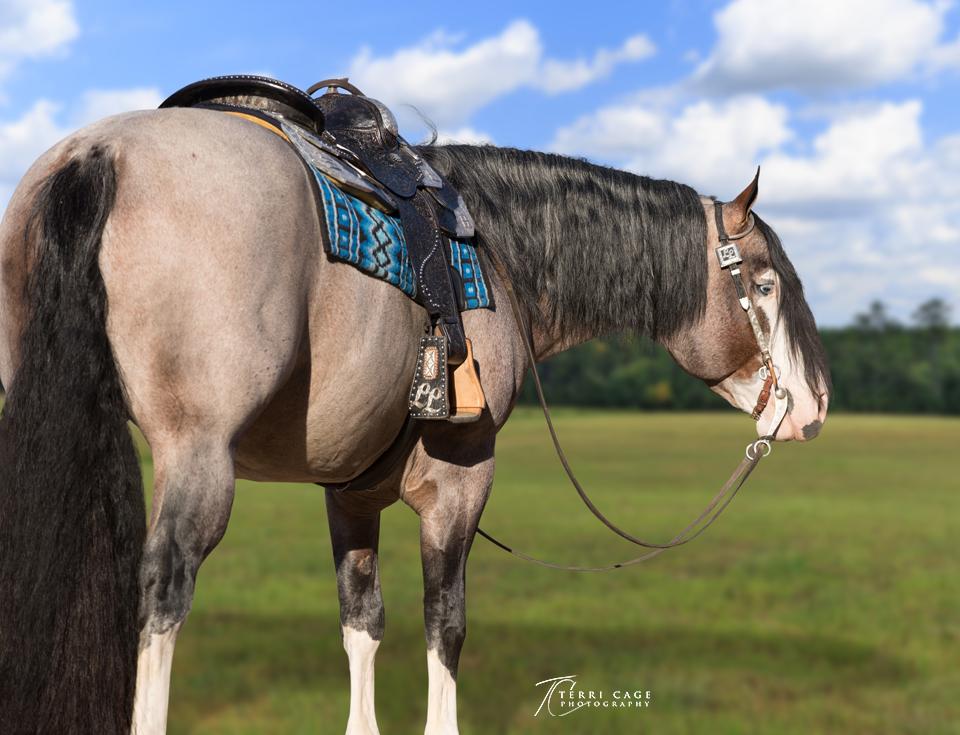 stallion ranch call 0467grass.jpg