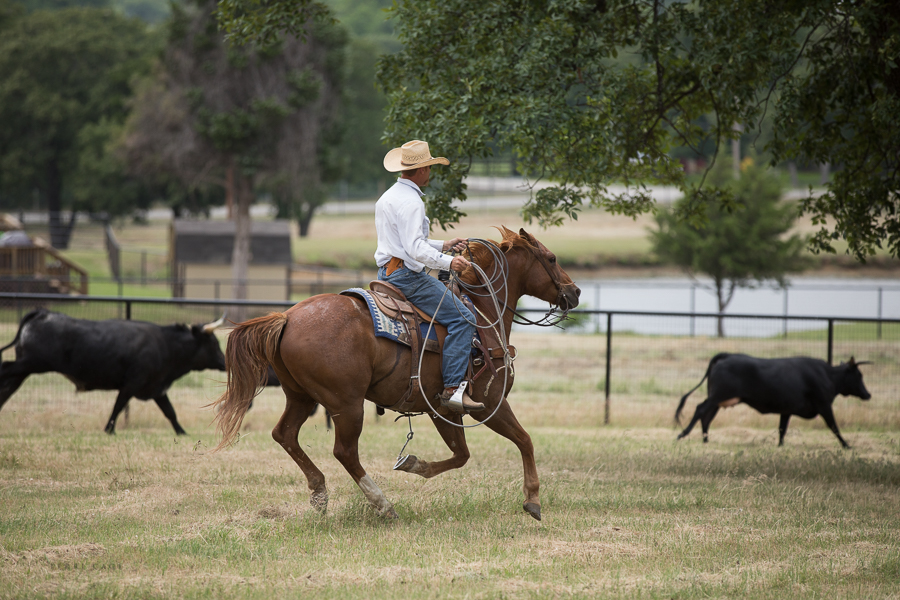 roping calves