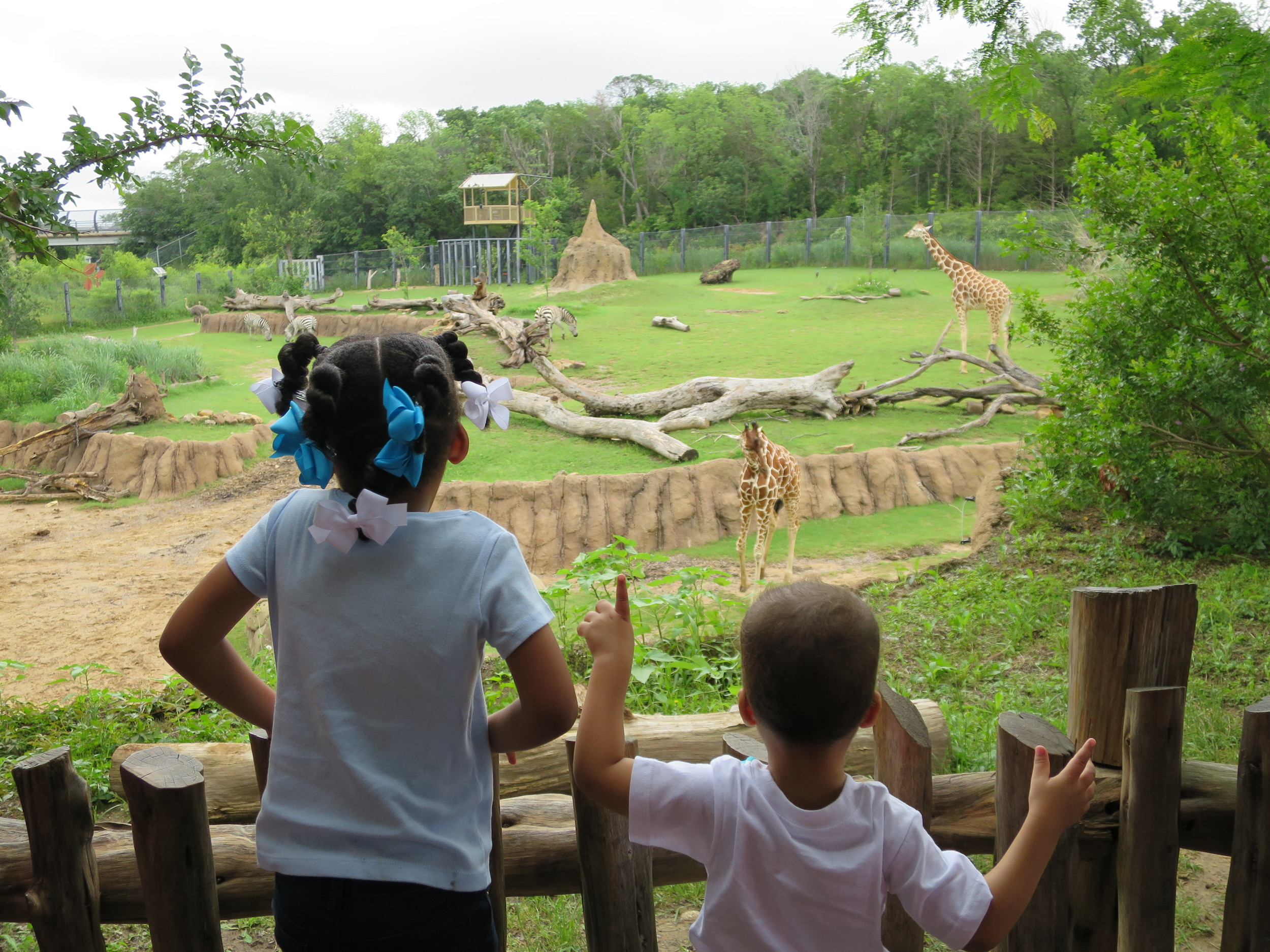 Day 305: Elliott's first trip to the zoo in over a year. He was amazed to see all the animals from his books at home.