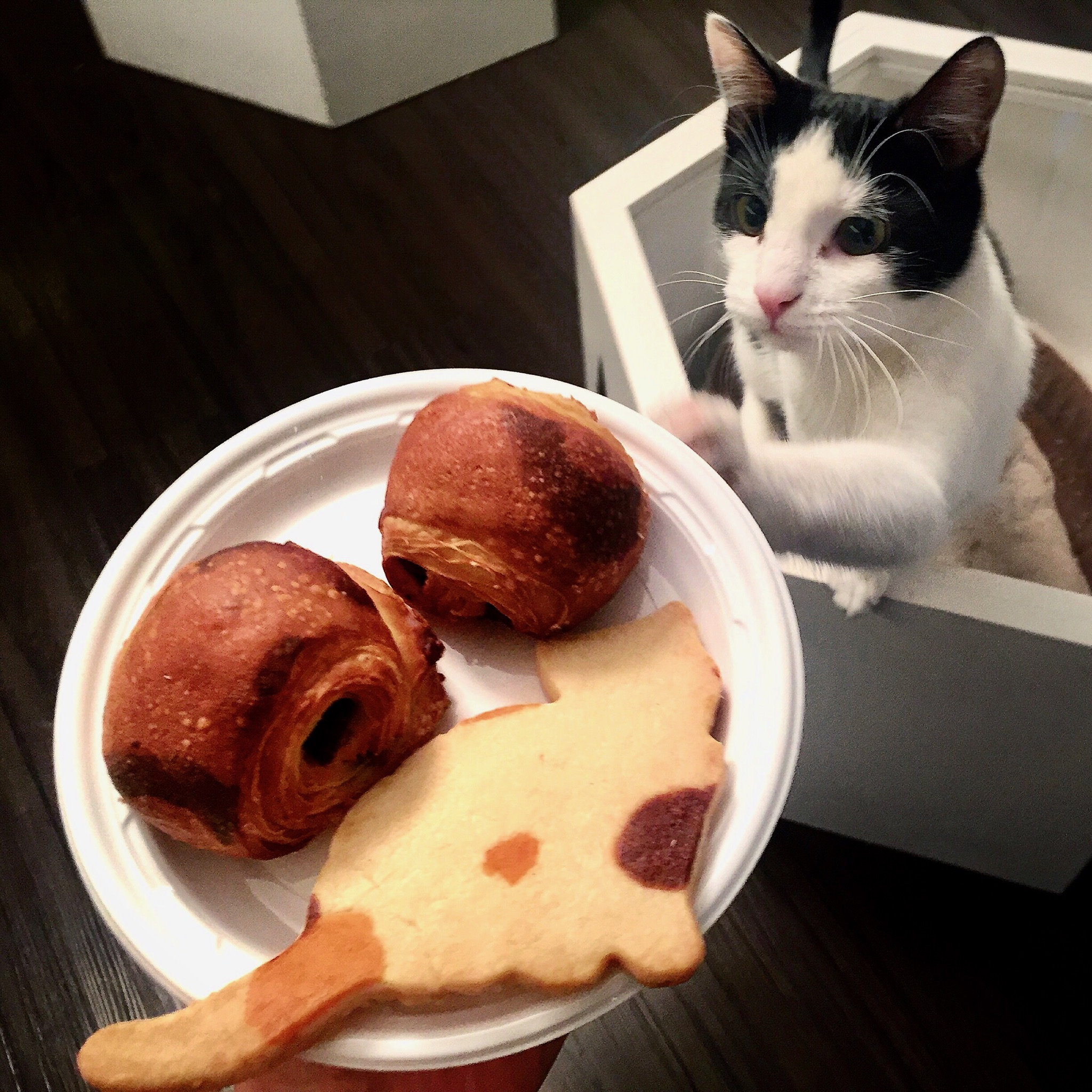 Snack Time With Our Cats - A special package to enjoy more time with the kitties and some treats :+ 1.5 hour in the cat space+ 1 baked goods+ 4 macarons or 1 ice-cream sandwich+ 1 beverageFor adults & children 9 and older (Guests under 16 must come with a chaperone) $35 (Monday, Tuesday, Thursday, Friday at 12:15pm and 2:15pm only).For a regular reservation, book here.