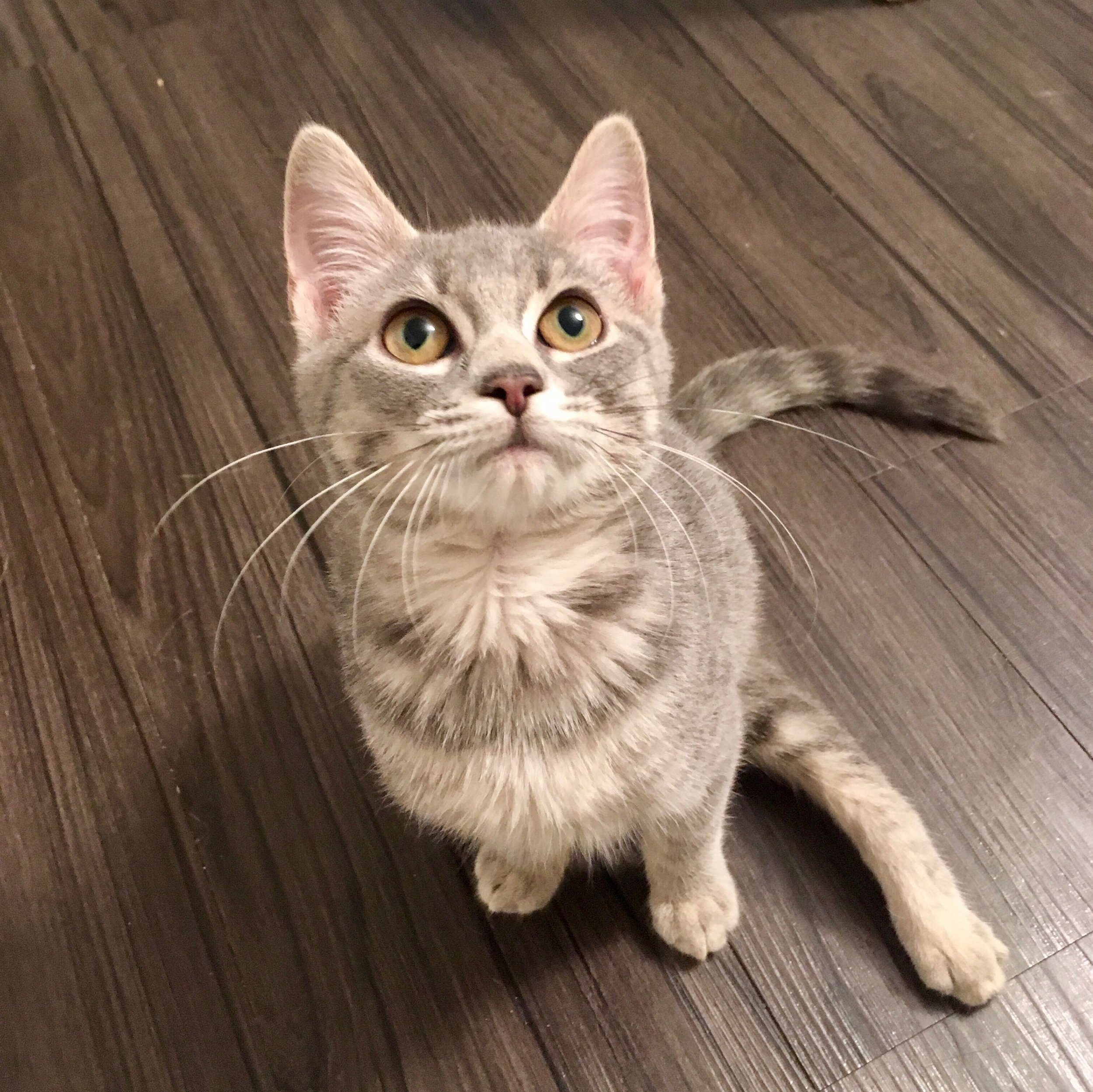 Congratulations! - We're thrilled you've chosen to adopt from Meow Parlour and we're here to help you understand your new companion.Here are resources we find really useful, and as always do not hesitate to reach out with any questions or concerns.