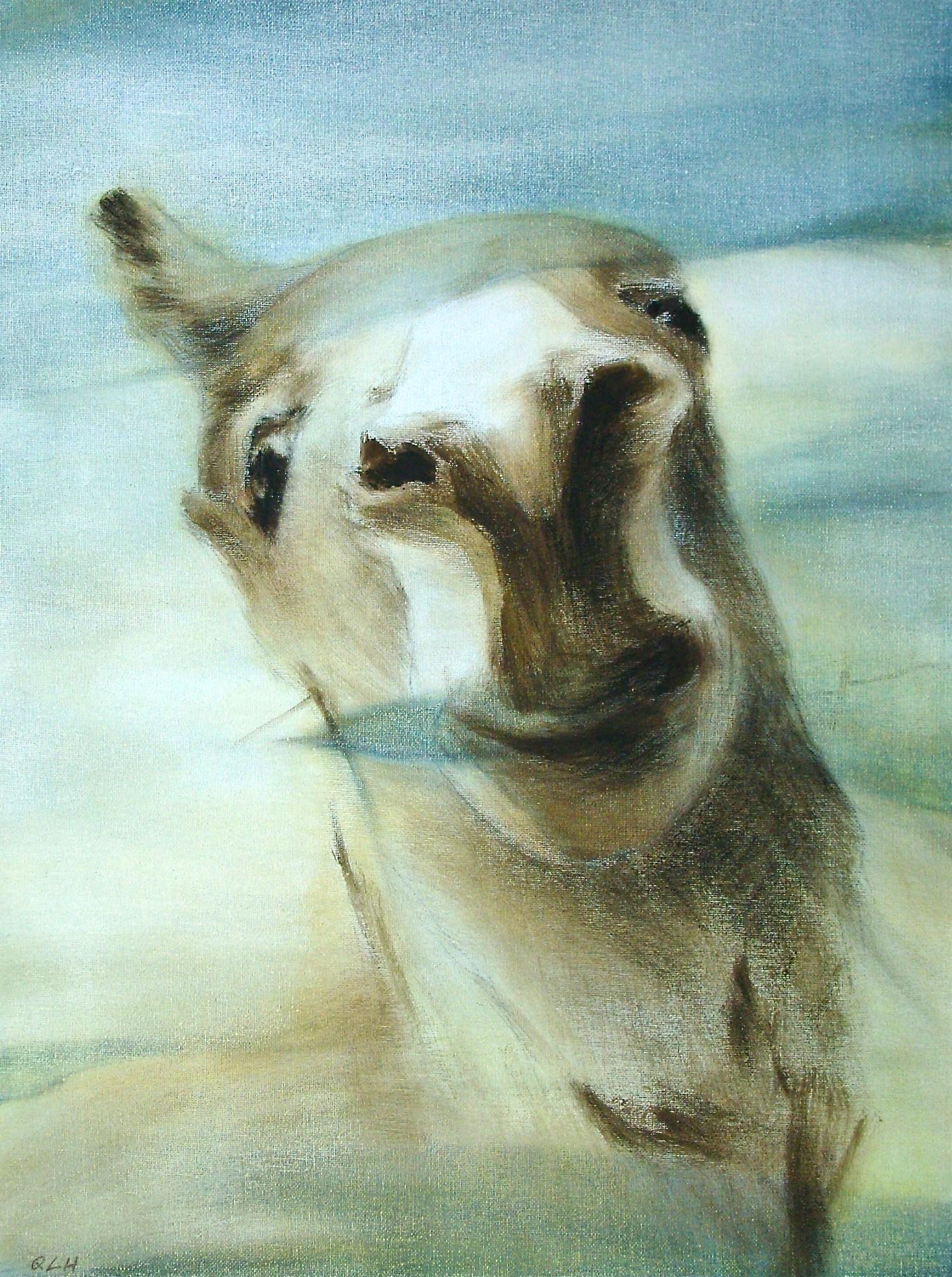 """donkey, 13x18"""""""