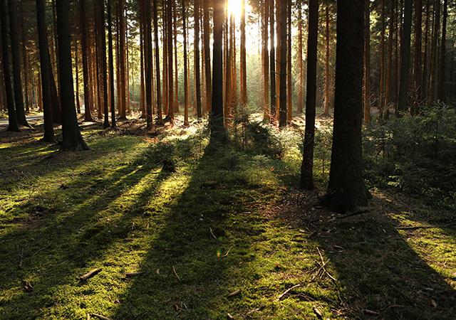 02-Alberta-Forestry-Softwood-Lumber-Agreement.jpg